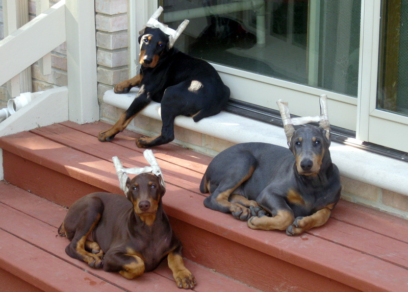 3 boy on the porch